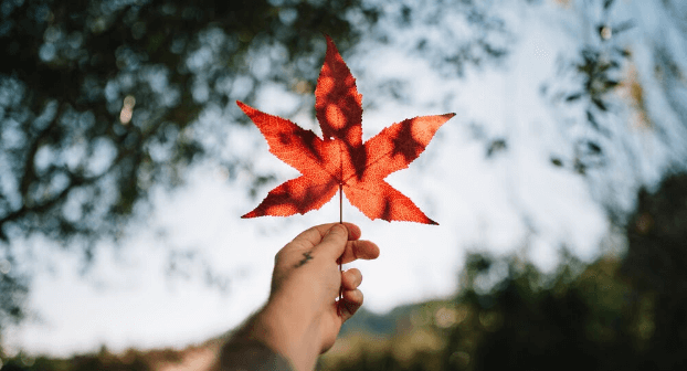 canada-maple-leaf